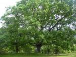evolution et bible,forêt,argile yprésien,flamands et wallons