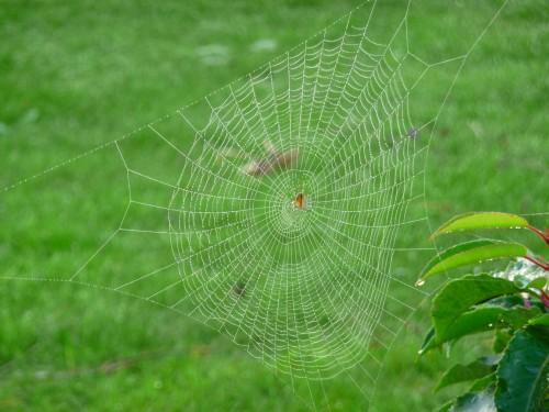 intergénération,toile,araignée,séduction