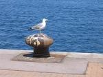oiseau quéteur,b.d.,désenchantement doudou